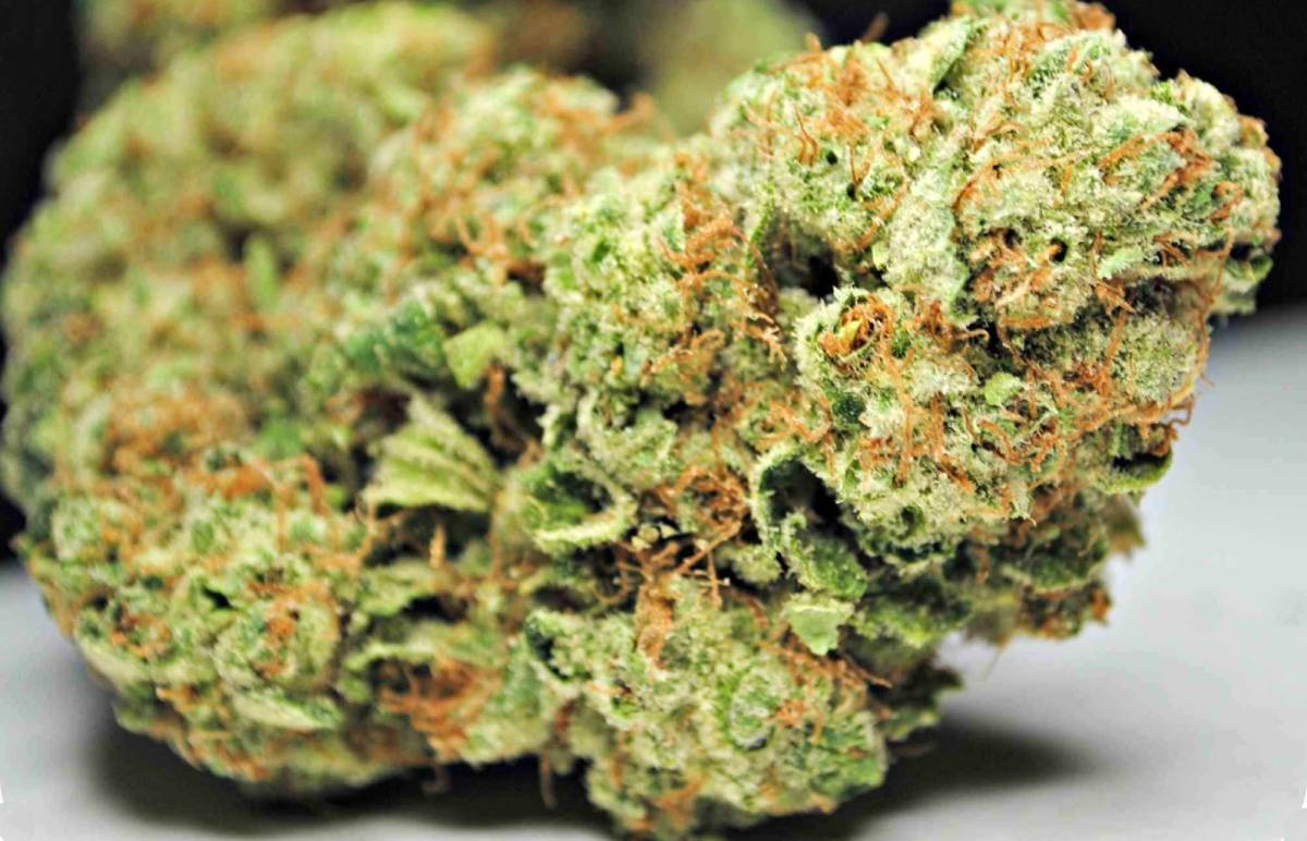 Jack the ripper strain review