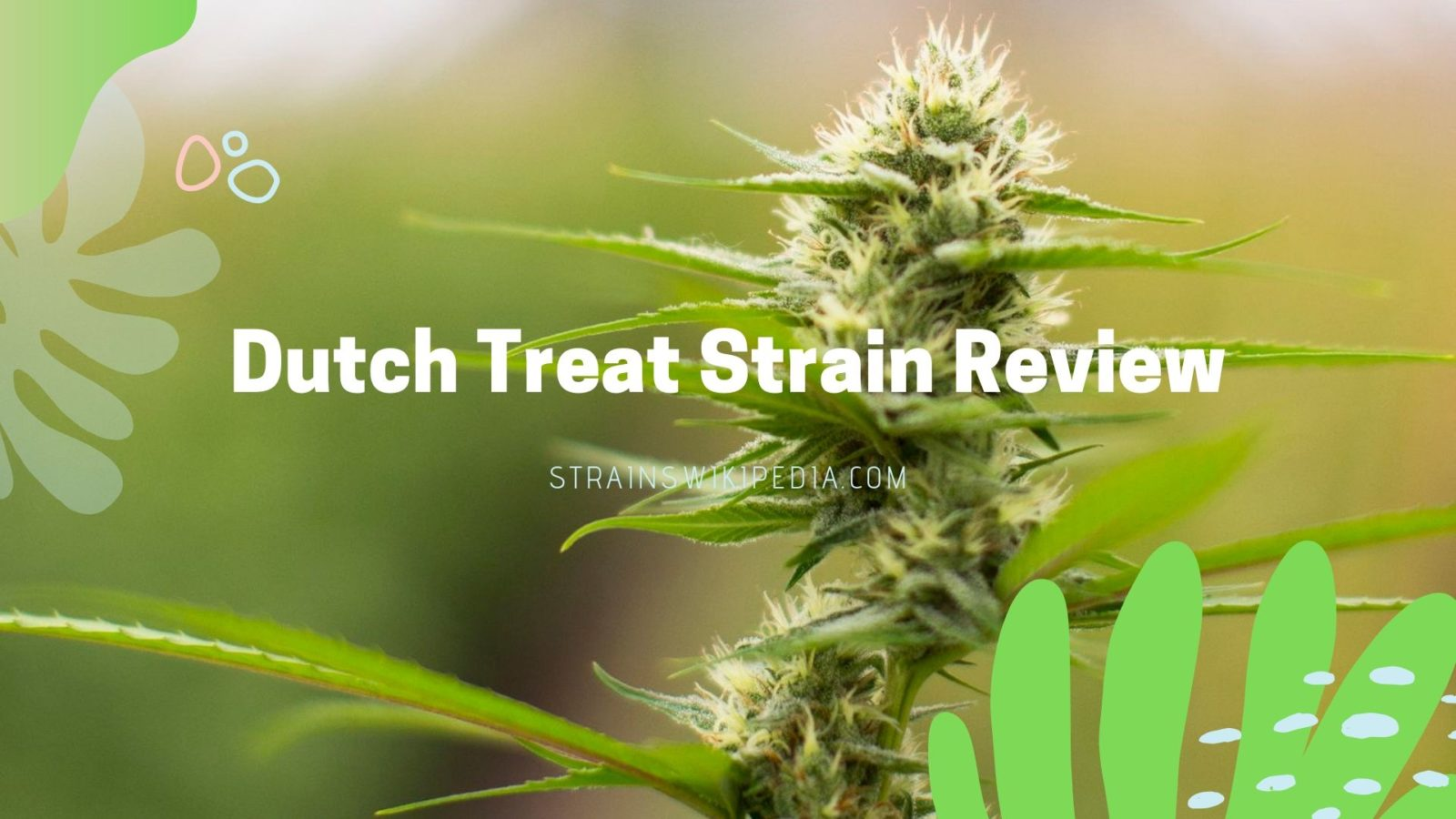 Dutch Treat Strain review