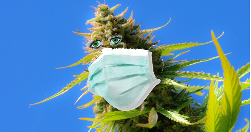 Cannabis bud wearing mask
